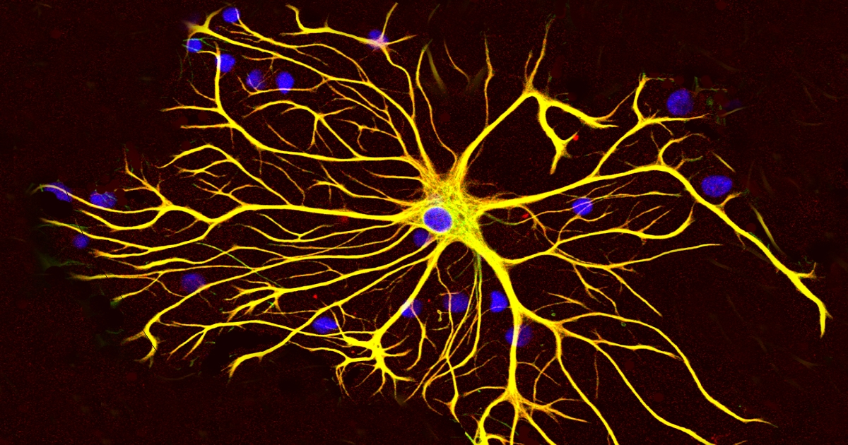 ALS, SCI Research Shows Astrocytes' Importance in Treatment - Beike